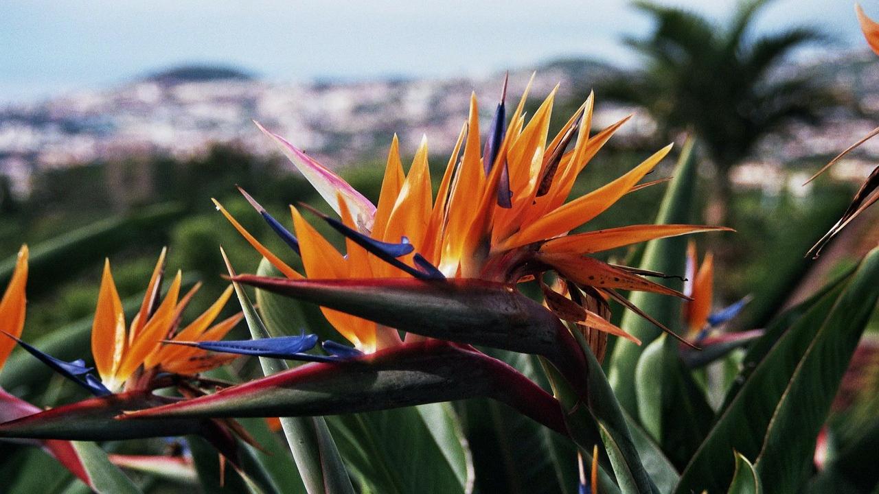Grădina-botanică
